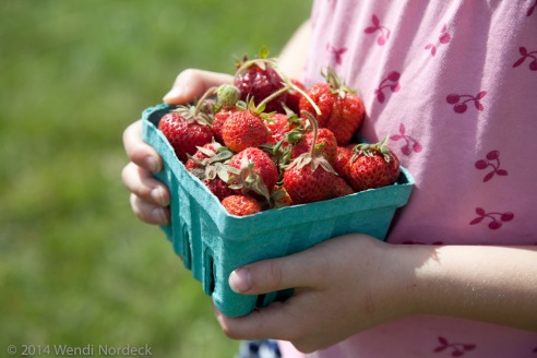 Strawberry Picking from https://roux44.com